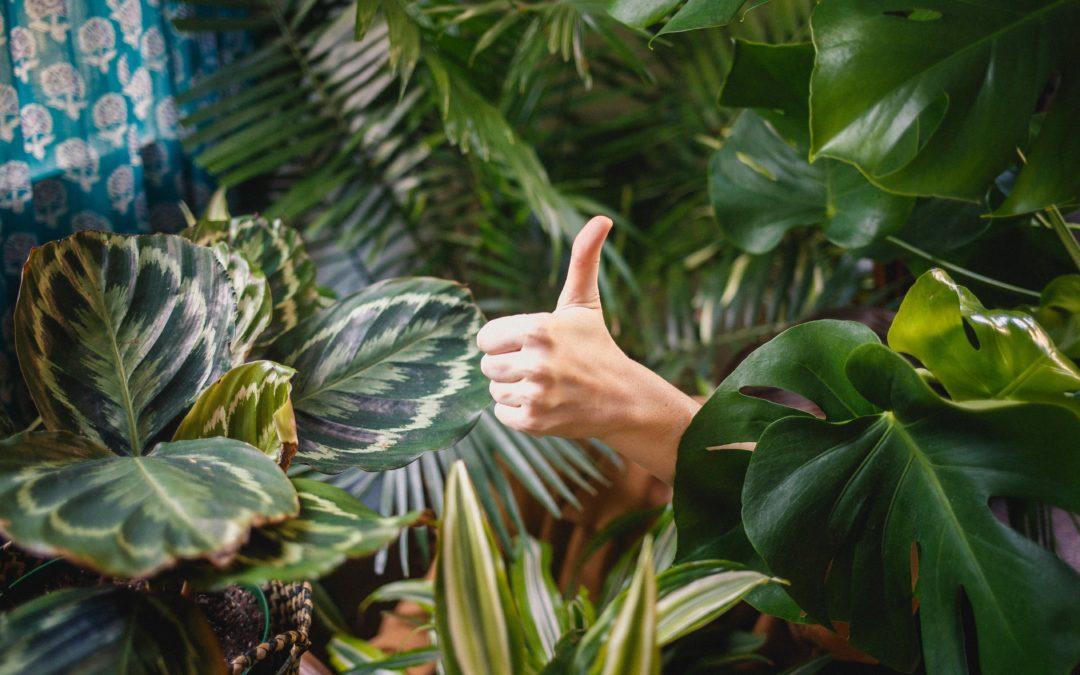 Top 6 leuke planten voor in huis (en hoe je ze in leven kunt houden!)